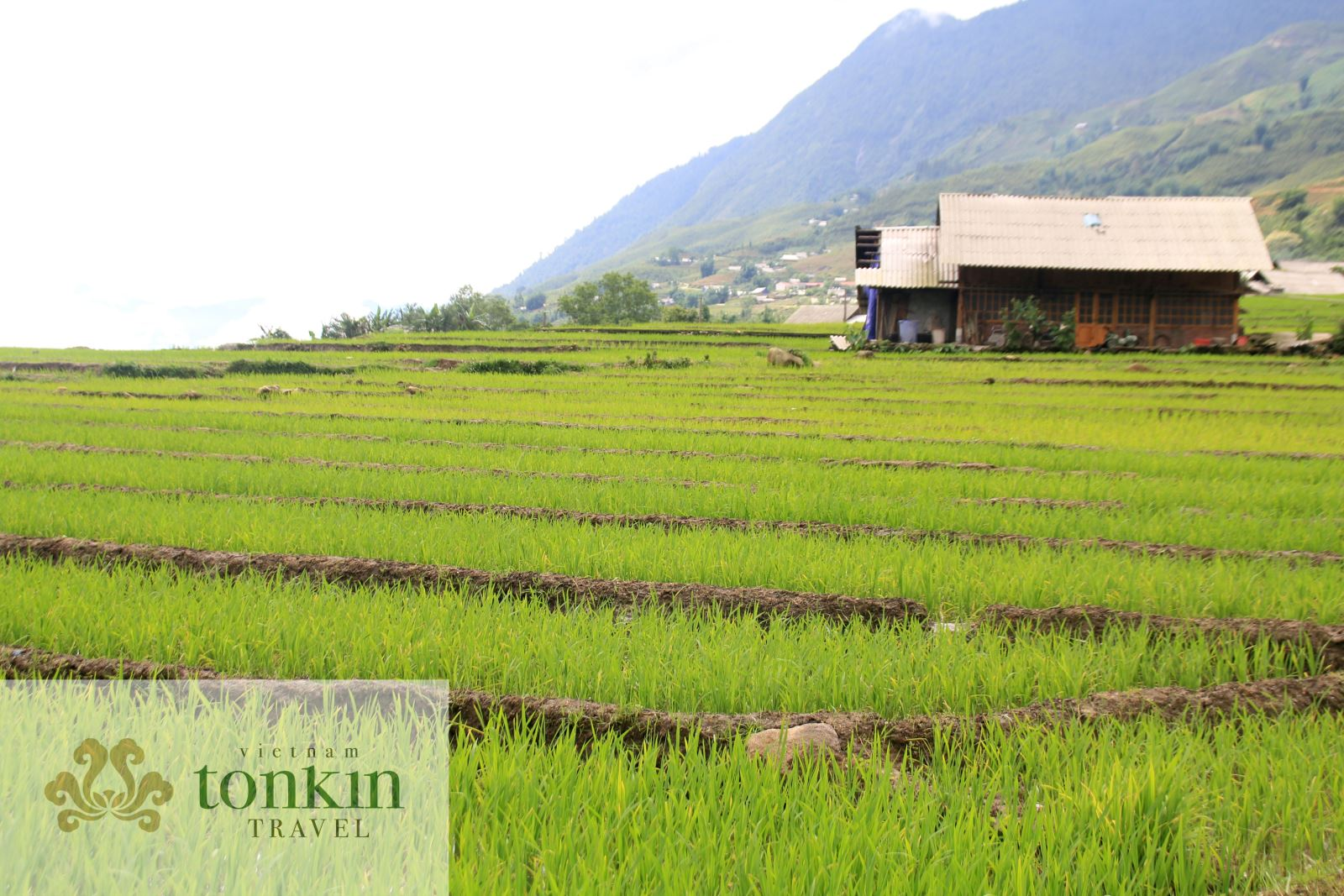 Northern Vietnam highlights adventure 9 days 8 nights