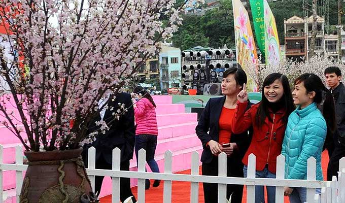 Cherry blossom festivals to open in Ha Long and Da Nang