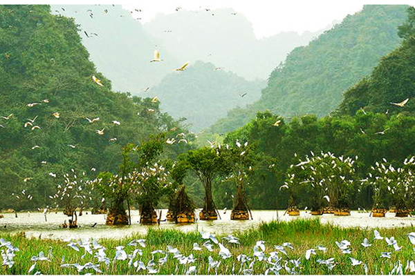 "Discover ""The Land of Birds"" in Ninh Binh"