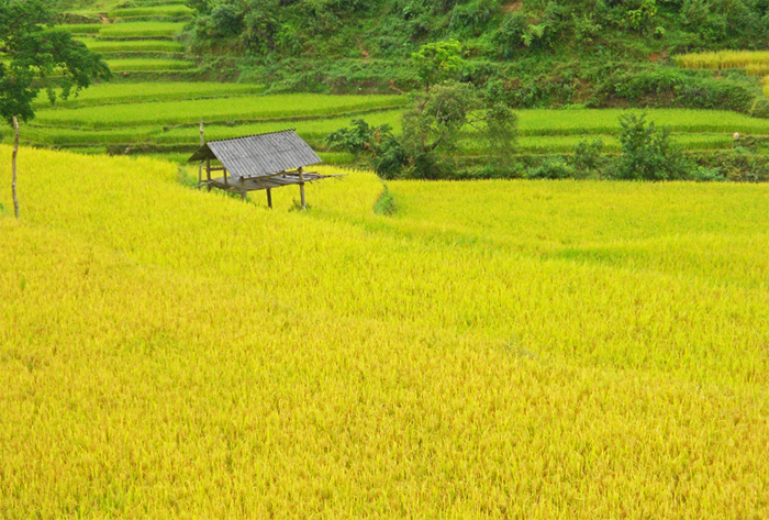 Ha giang and Halong package tour in 7 days