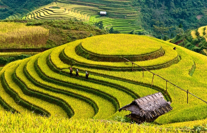 Mu Cang Chai trekking 3 days 2 nights