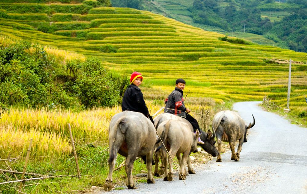 Hanoi - Sapa - Halong Package tours in 5 days